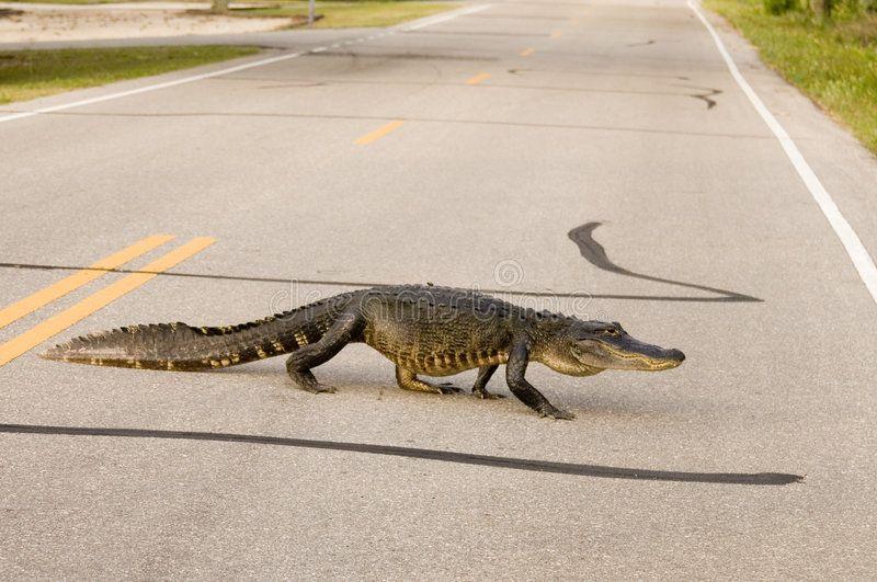 Krokodil in Blankenese gesichtet!!!