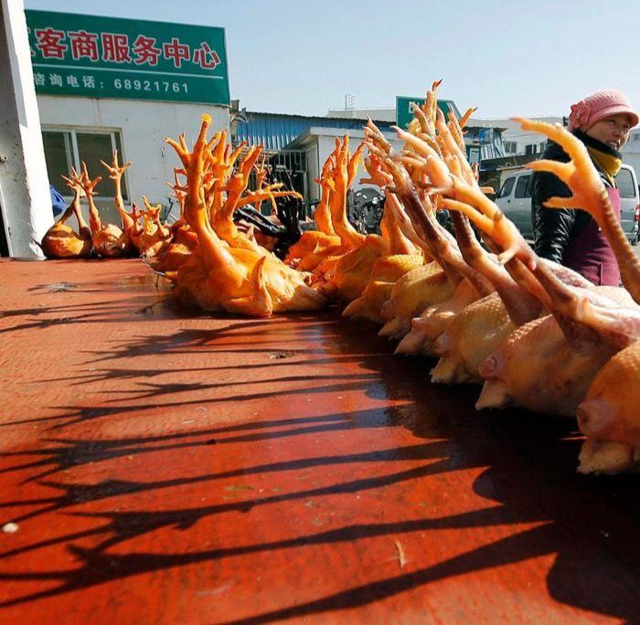 Erster Todesfall durch Vogelgrippe beim Menschen